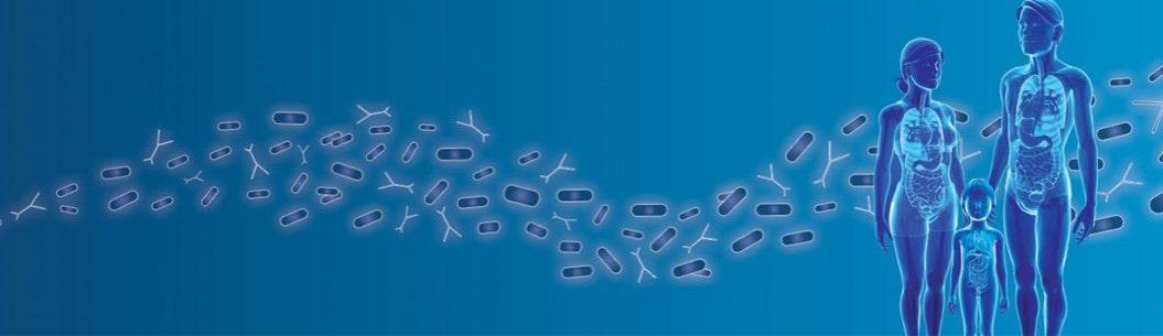 Souches bactériennes au service des microbiotes