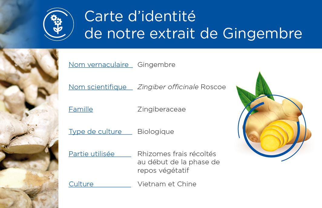 Carte identité Gingembre
